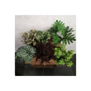 Művirág szobanövény mix 23-37cm szürke agyagcserépben